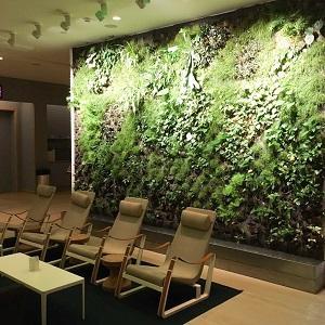 Plantas de interior para una casa sana