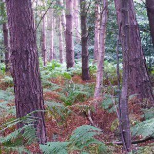 Los bosques son grandes sumideros de carbono